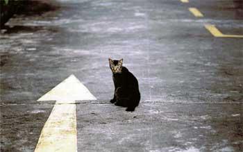 Могут ли коты найти дорогу домой