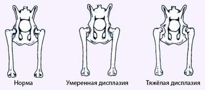 Дисплазия тазобедренных суставов у рет даже его суставом в мобильный аппарат