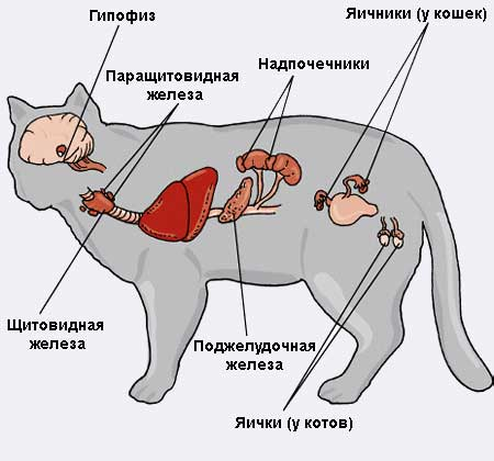 6 болезни кошек ветеринарный справочник для владельцев кошек