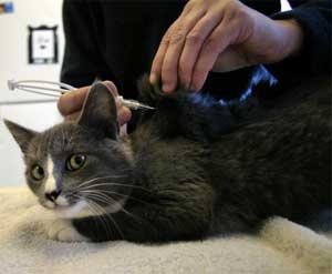 Ошейники для котов с чипом