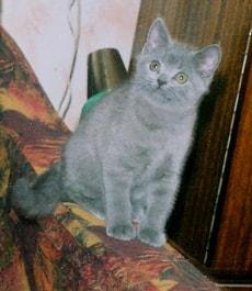 видео котята 3 месяца фото