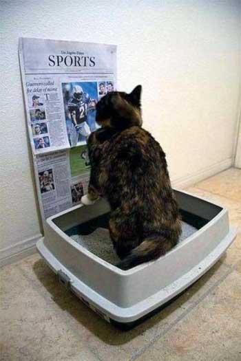 Пахнет из лотка кота