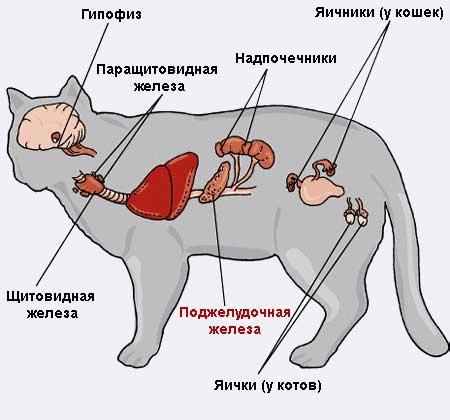 Лечение поджелудочной железы кота