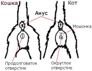 porno-transi-tolpoy-ebut-odnogo-muzhika