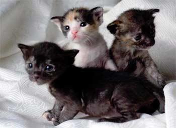 Котята новорожденные картинки 4