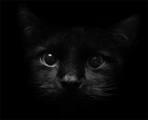 картинка кошка черная