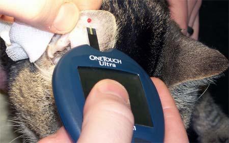 Лечение диабета у кошек