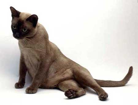 Трудные роды у кошек