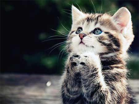 Кошка все время просит есть