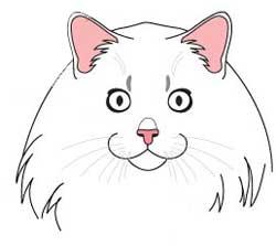 рисунок сибирской кошки