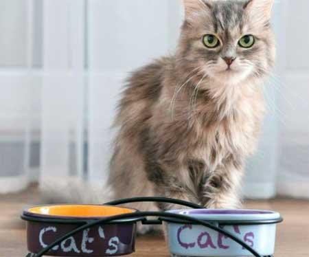 У кошки нет аппетита
