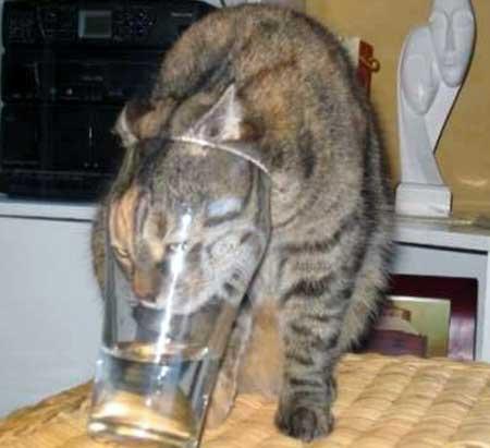 Сколько воды должна пить кошка